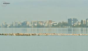 pelicani lac siutghiol constanta octombrie 2020 by Joie Negru  (5)